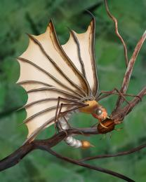 Dangerous Butterfly