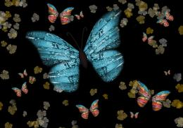 Butterfly flutter Picture