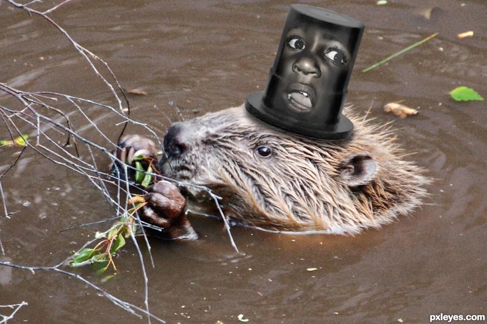 Crazy Screaming Beavers Hat