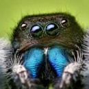 creepy crawlies photography contest
