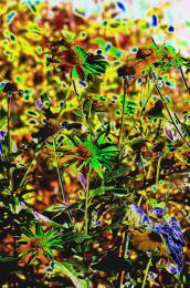 powerflower
