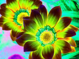 Psychedelicflowers