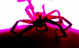 freaky spider Picture