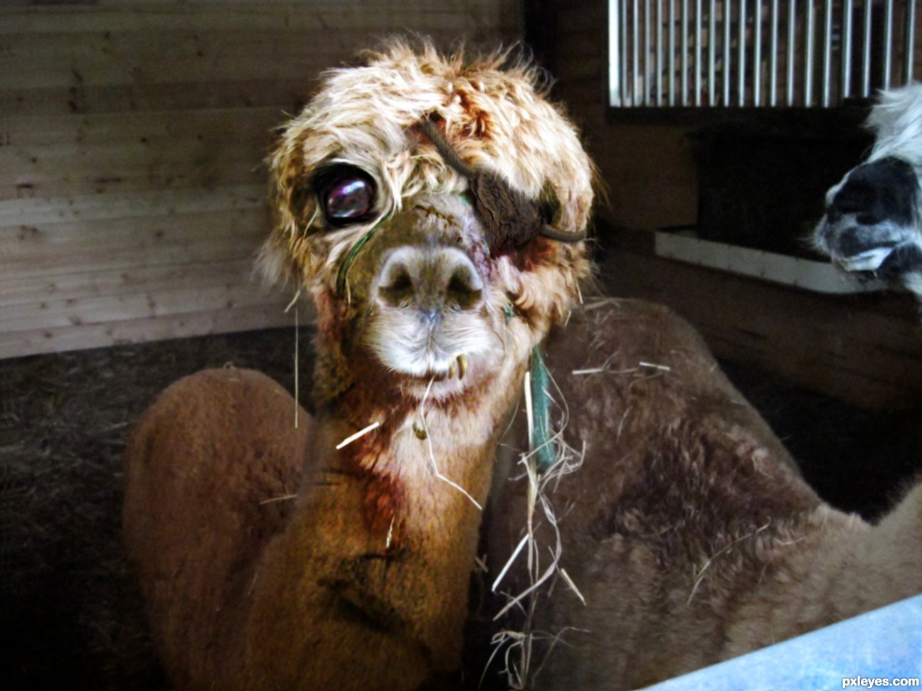 Cute Zombie Animals Photoshop Contest (20900), Pictures