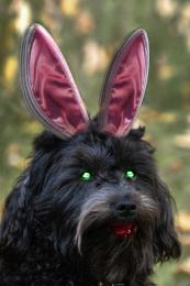 Zombie Puppy being Bunny