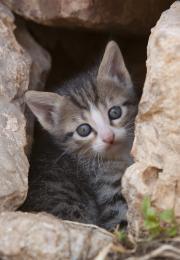 Kitten on chios (greece)