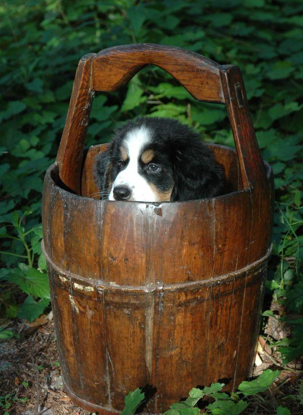Bucket buddy