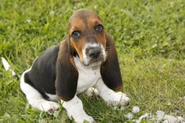 Cute puppy Bella Picture