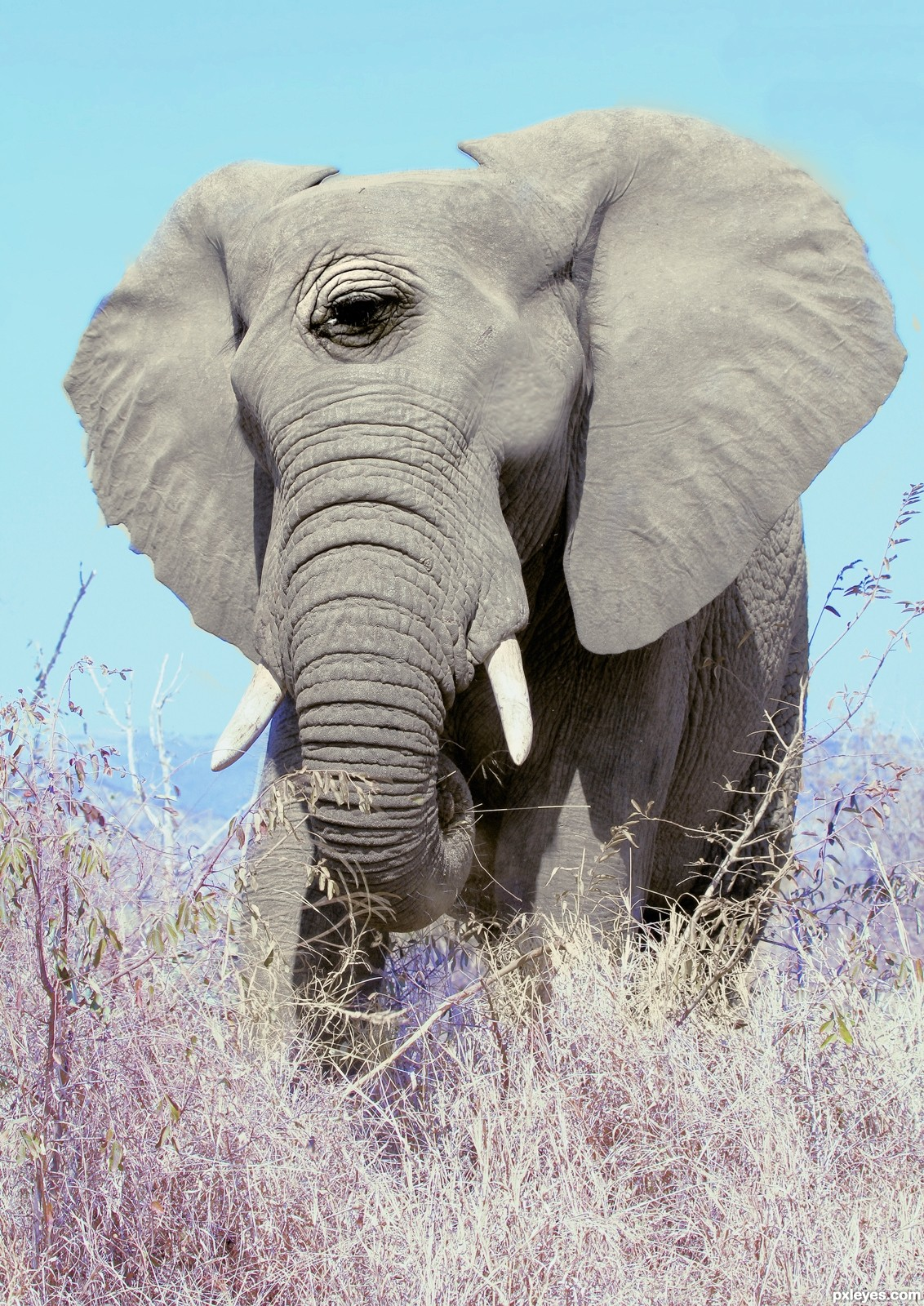 Elephant contest pictures made with photoshop image page 3 - Image elephant ...