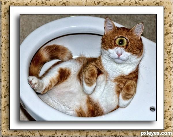 Lady Eau de toilette