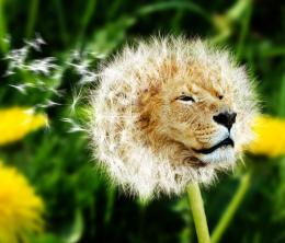 Dande Lion Picture