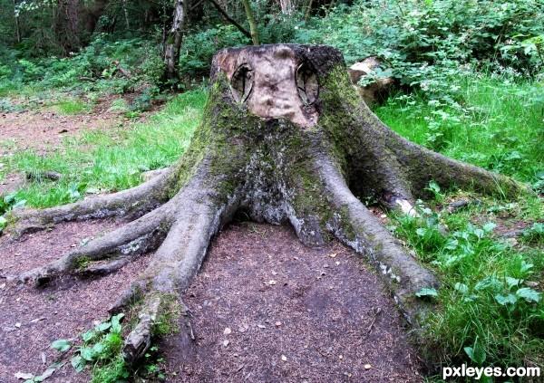 Dead Octopus Tree