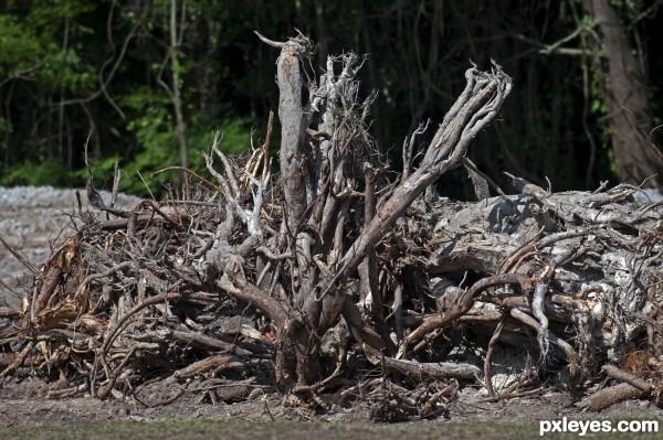 Dead tree parts