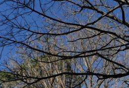 Branchescrossing