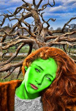 Ginger Envy