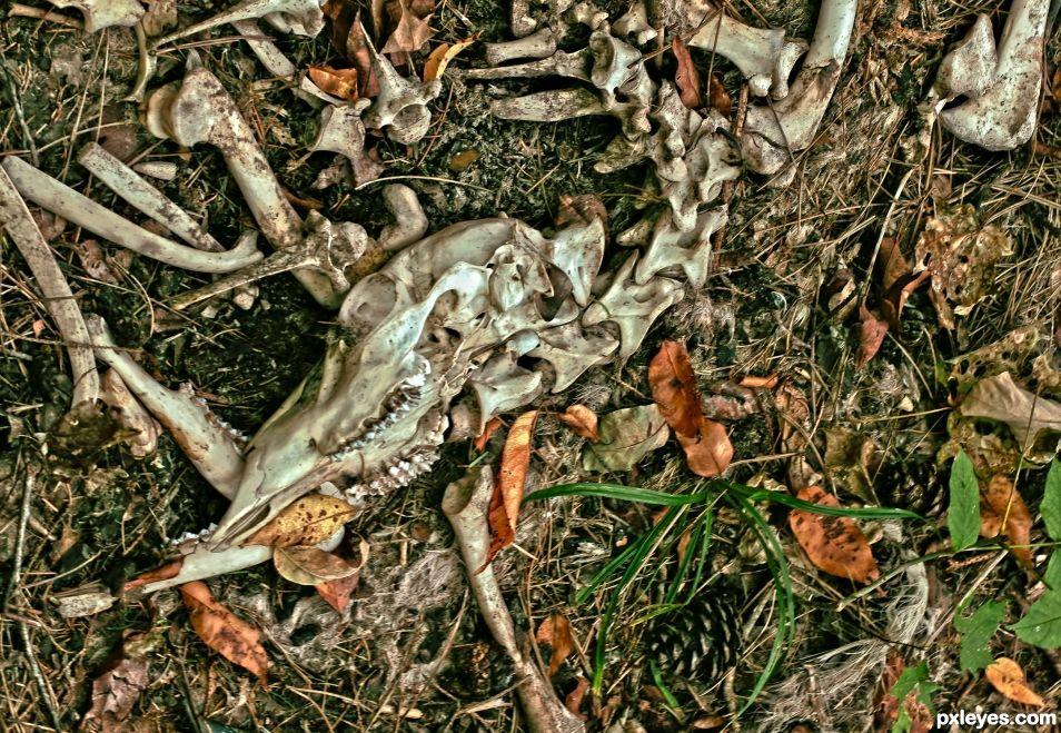 Deers Demise