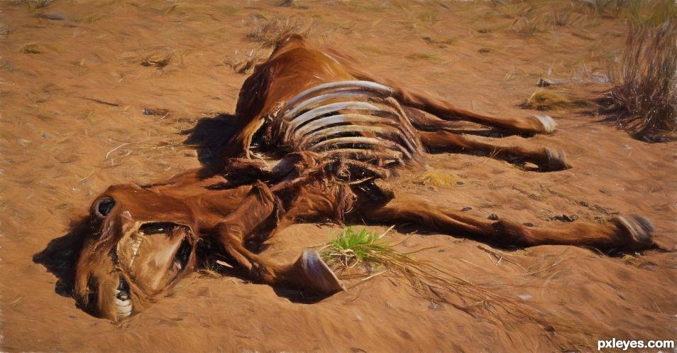 Horse, Gobi Desert