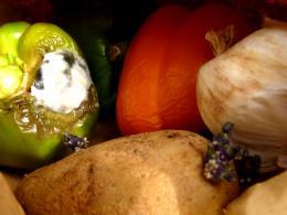 Vegetablesonvegetables