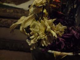 dieing flowers