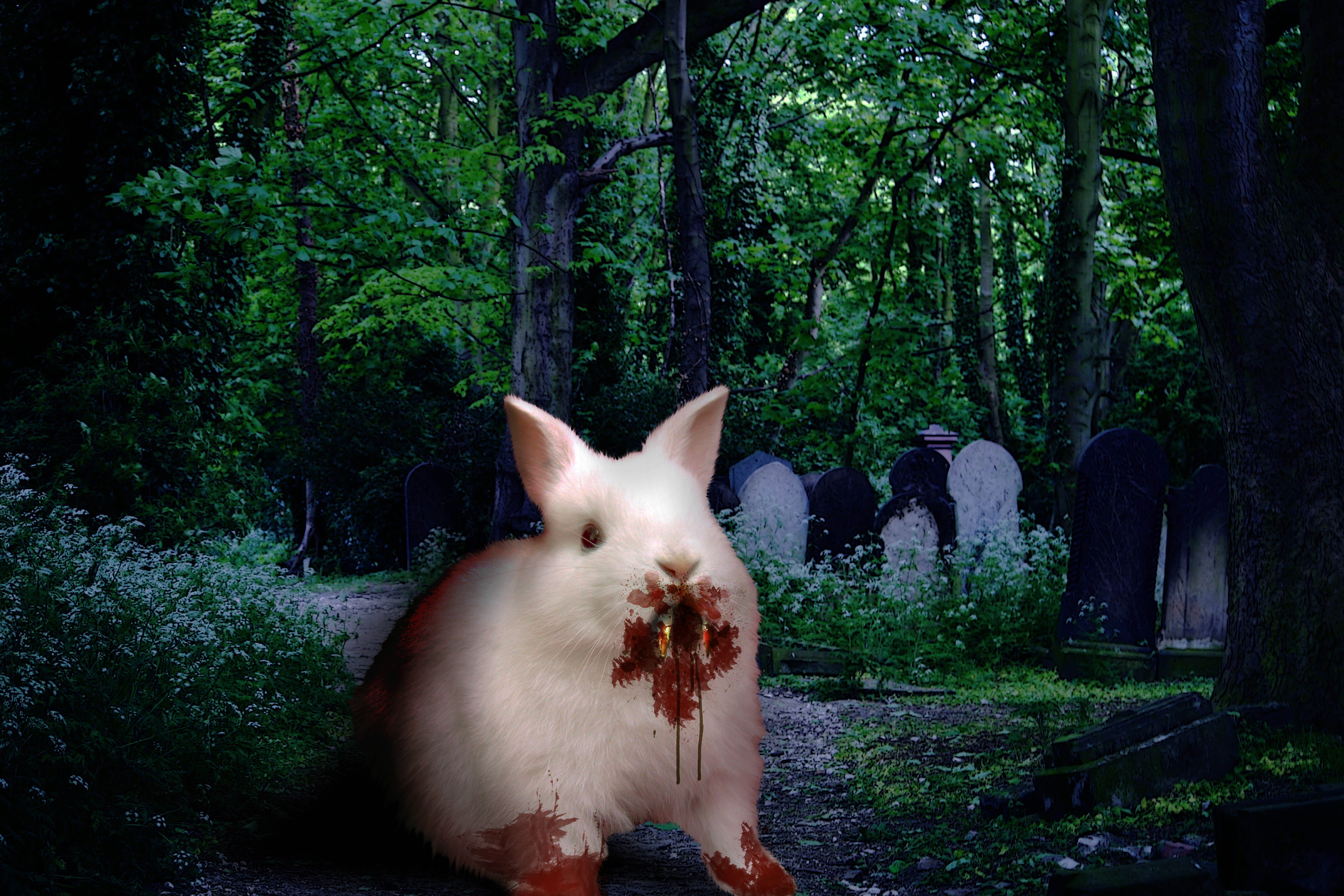 Killer animals - photo#2