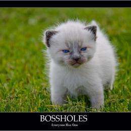 Bossholes