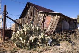 CactusandDirt