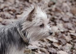 mydog