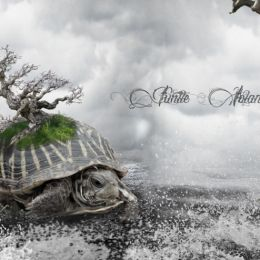 Turtle Island Picture