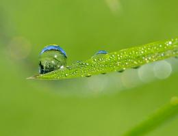 dew Picture