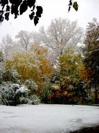 Snowonfallfoliage
