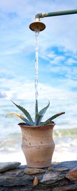 Thirsty pot
