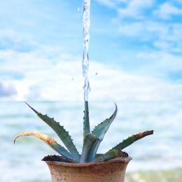 Thirstypot