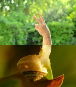 Snail fingers