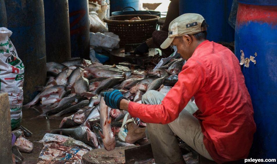Making of Prahoc fish sauce