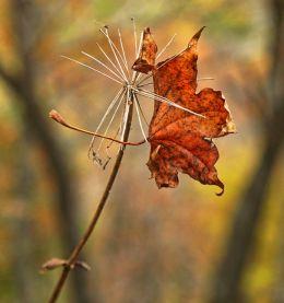 Warm Autumn Hues