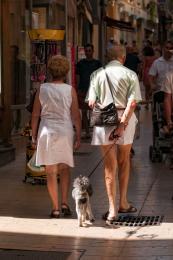 WalkingthePoodle