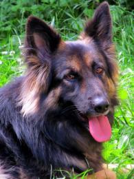 My Faithful Dog
