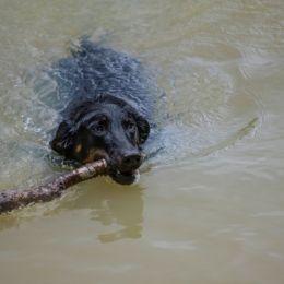 Agoodswimmer