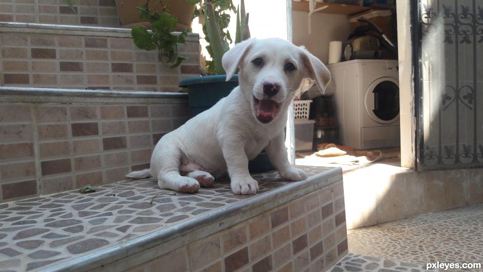 Happy Puppy. Pawty!