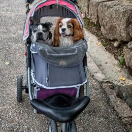 Takingthedogsforawalk