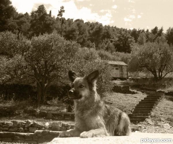 Near the olives