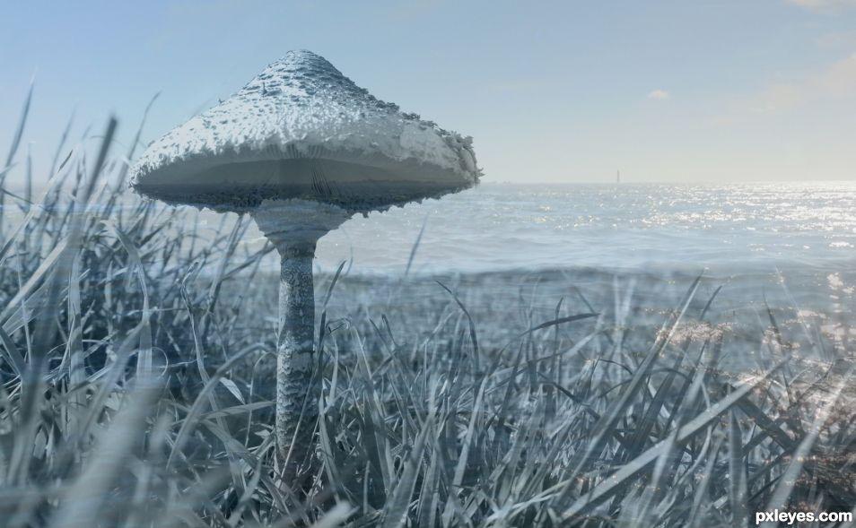 Maritime mushroom