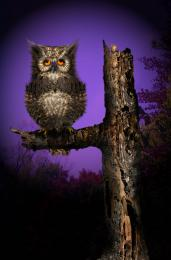 Fuzzy,Sleepy Owl