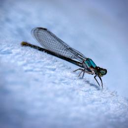 Dragonfly0289b9
