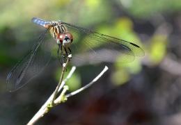 RainbowyDragonfly
