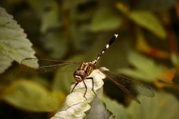Restafterflying