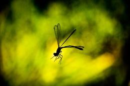 TrappedDragonfly