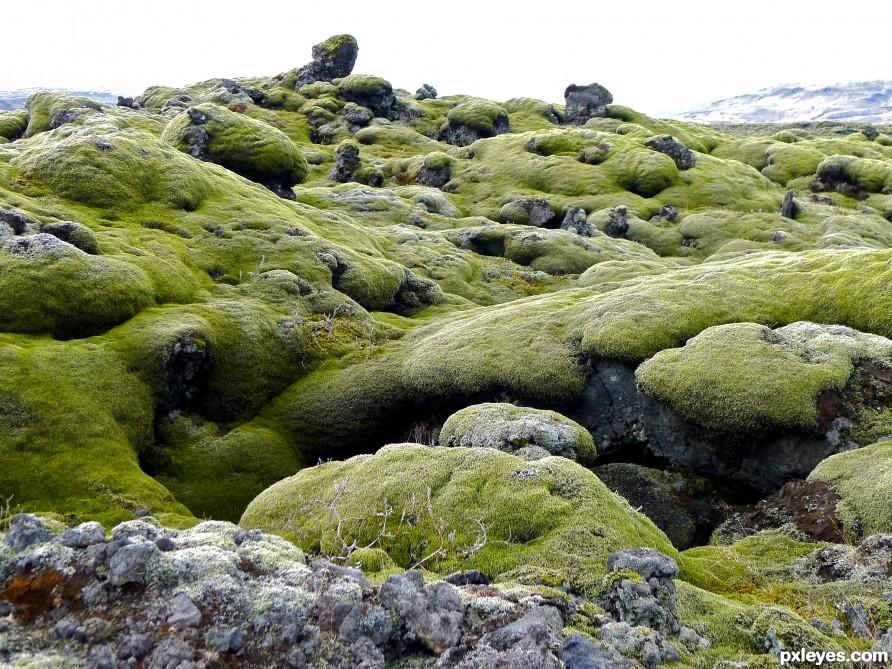 moss on lava