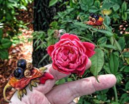 RosePetalNibblers