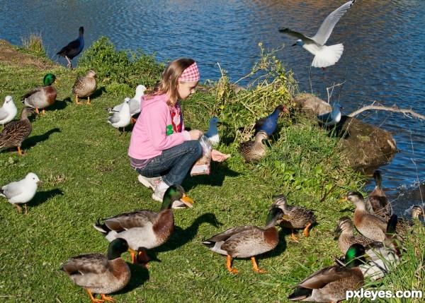 ducks and sea gulls